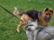 Psa zwierzęcia domowego myśliwego ochrony ratownika Łuskowatej walki natury gry obce bestie zdjęcie royalty free