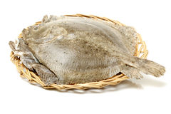 Psetta maxima (Turbot Fish) Stock Image