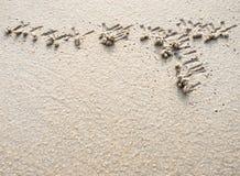 Pseudofeces op het zandige strand, zandtextuur Royalty-vrije Stock Foto's