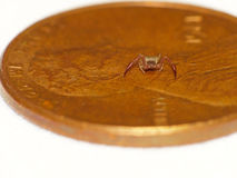 Pseudoscorpion On A Lincoln Penny Royalty Free Stock Image