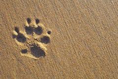 Psi łapa druk na piasku zdjęcia stock
