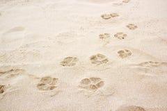 Psi łapa odcisk stopy na piasku obraz stock