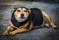 Psi łasowanie i relaksować Zdjęcia Stock