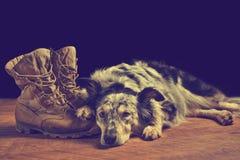 Psi łgarski puszek obok bojowych butów obrazy royalty free