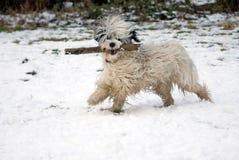 psi śmieszny śnieg Zdjęcia Royalty Free