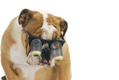psi śmieszny zdjęcie stock