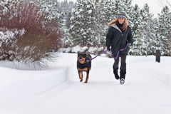 psi żeński odprowadzenie Fotografia Royalty Free