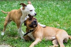 Psi bój zdjęcia royalty free