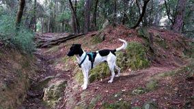 Psi badający las zdjęcie royalty free