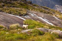 Psi bawić się między górami fotografia stock