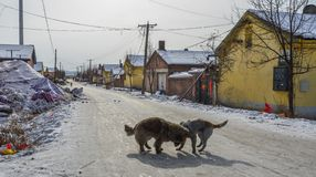 Psi bawi? si? na zimy drodze fotografia stock