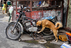 Psi bawić się przy slamsy w Manila, Filipiny Fotografia Stock