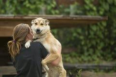 psi bawić się psia dziewczyna gra Obrazy Stock