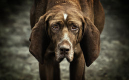 psi bezdomny Obraz Stock