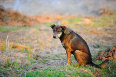 psi bezdomny błąka się Zdjęcia Stock