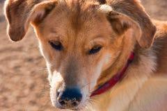 psi bezpański obrazy royalty free