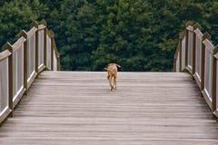 psi bezpański Obraz Royalty Free