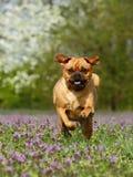 psi bieg obraz royalty free