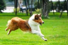 psi bieg zdjęcia stock