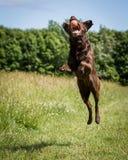 Psi bieg i Bawić się Fotografia Stock