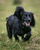 Psi bieg i Bawić się Obrazy Royalty Free