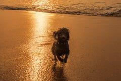 Psi bieg na plaży Obraz Stock