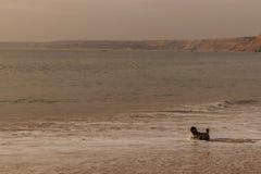 Psi bieg na plaży Obrazy Stock