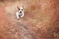 Psi bieg przy jesienią Obraz Stock