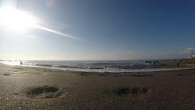 Psi bieg wzdłuż wybrzeża zbiory