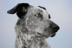 psi biel Zdjęcia Stock