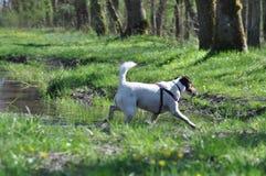 Psi borowinowy skąpanie obraz royalty free