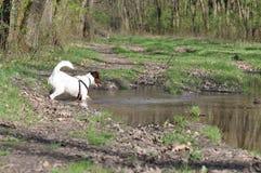 Psi borowinowy skąpanie obrazy royalty free