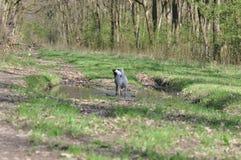 Psi borowinowy skąpanie zdjęcie stock