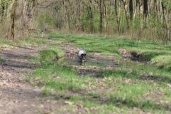 Psi borowinowy skąpanie obraz stock