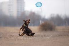 Psi Chwytający Latający dysk Zdjęcie Stock