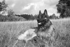 Psi cieszący się zimnego popiół w słońcu - strzał z analogu filmem zdjęcia royalty free
