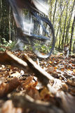 Psi cyzelatorstwo mężczyzna Na rowerze górskim obrazy royalty free