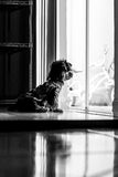 Psi czekanie zdjęcie stock