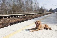 Psi czekanie dla jego mistrza wiejska stacja, wiosna dzień Obrazy Royalty Free