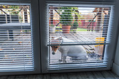 Psi czekanie dla otwarte drzwi obraz stock