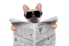 Psi czytanie zdjęcie royalty free