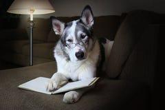 Psi czytanie książka jest ubranym szkła Obrazy Royalty Free