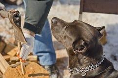 Psi dopatrywanie jako właściciela ciapania drewno obrazy stock