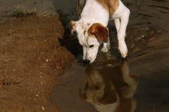 Psi Dostawać napój od zatoczki Fotografia Stock