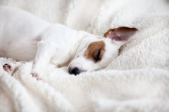 Psi dosypianie na łóżku zdjęcia royalty free