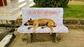 Psi dosypianie na ławce Zdjęcia Royalty Free