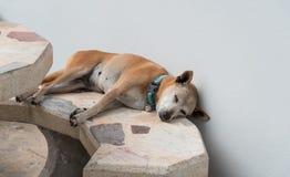Psi dosypianie na marmurowym stole Obraz Royalty Free