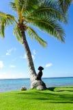 psi drzewko palmowe Fotografia Royalty Free