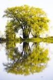psi drzewo Fotografia Royalty Free