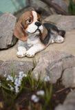 Psi figurka wystrój dla ogródu Zdjęcia Stock